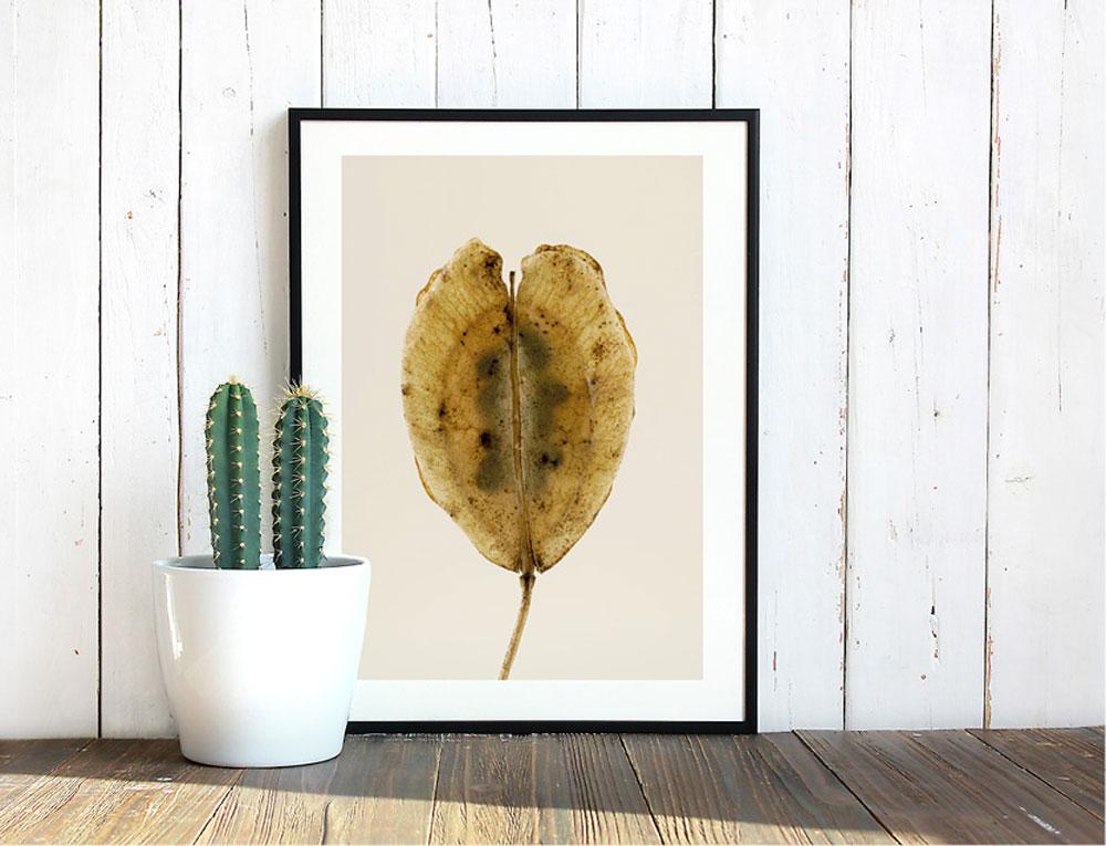 Einzigartige Wildpflanzenportraits